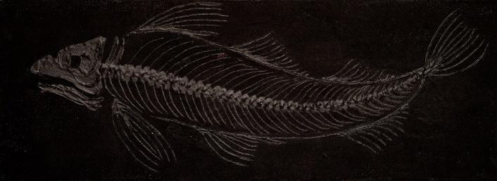 Fish-10